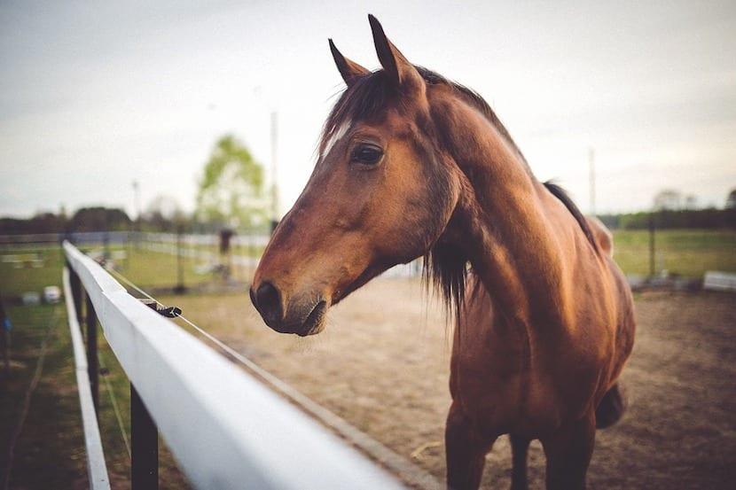 caballo marrón en el veterinario