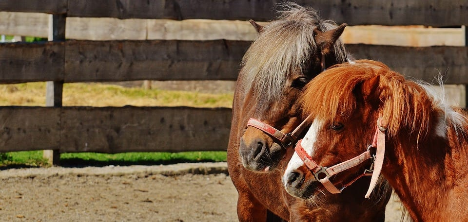Crin de caballo