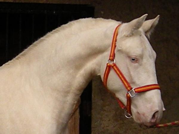 raza albino