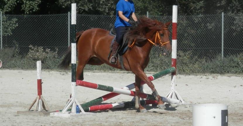 Yegua saltando con protectores de tendón