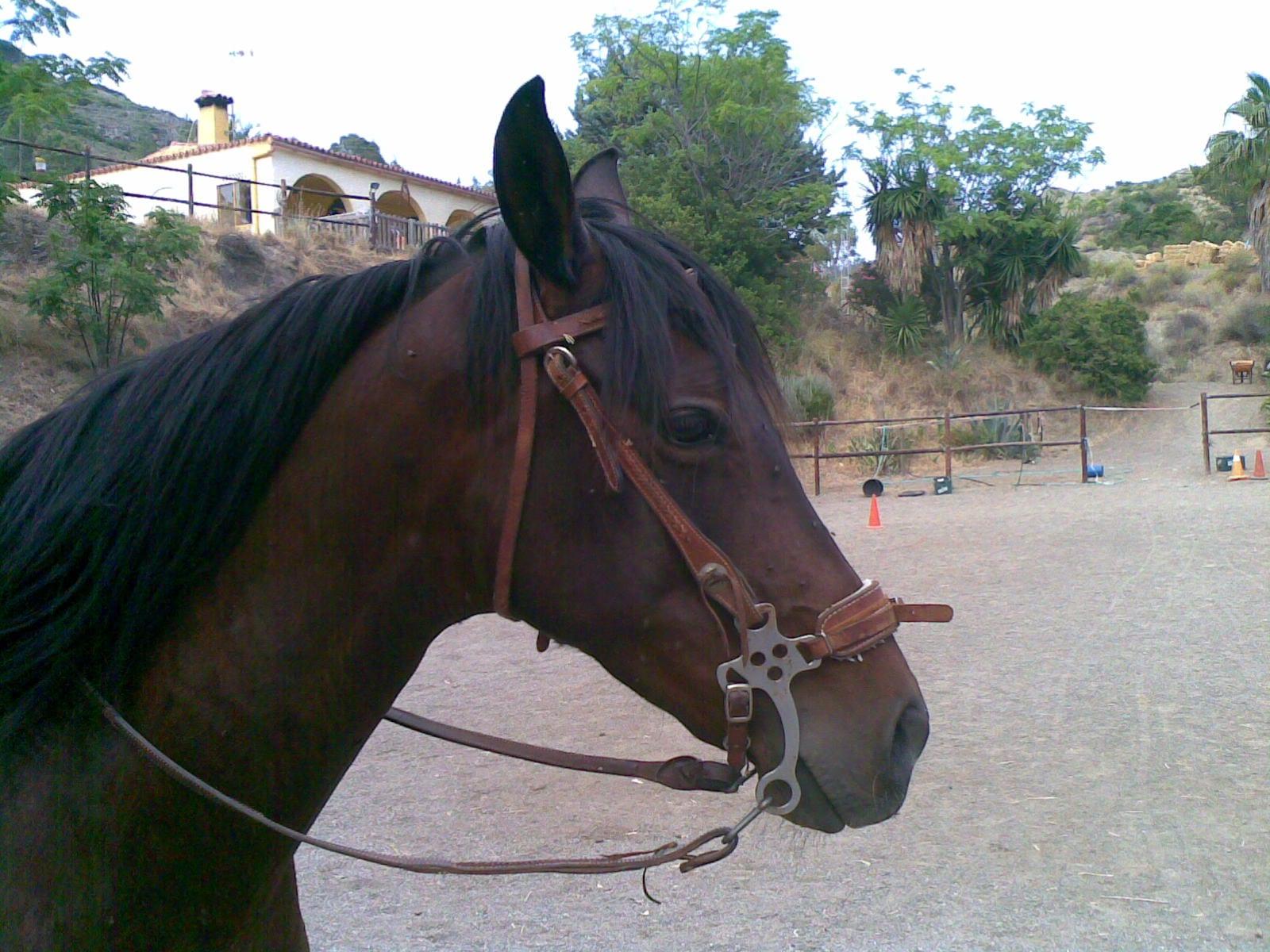 Accesorios para caballos for Accesorios para caballos