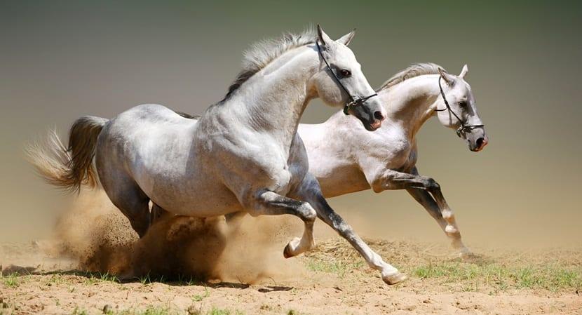 caballos miedo