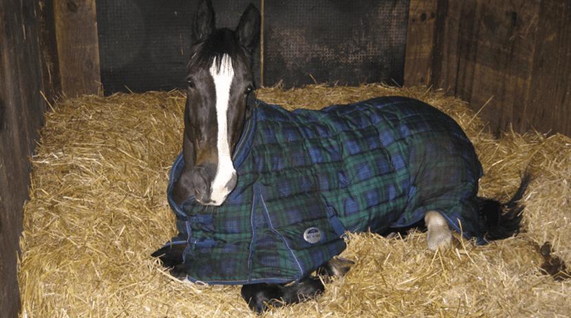 caballo resfría
