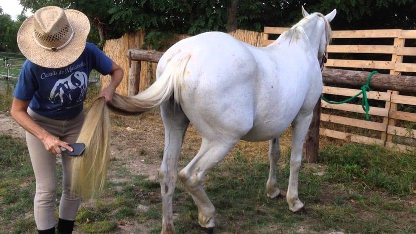 cepillado caballo