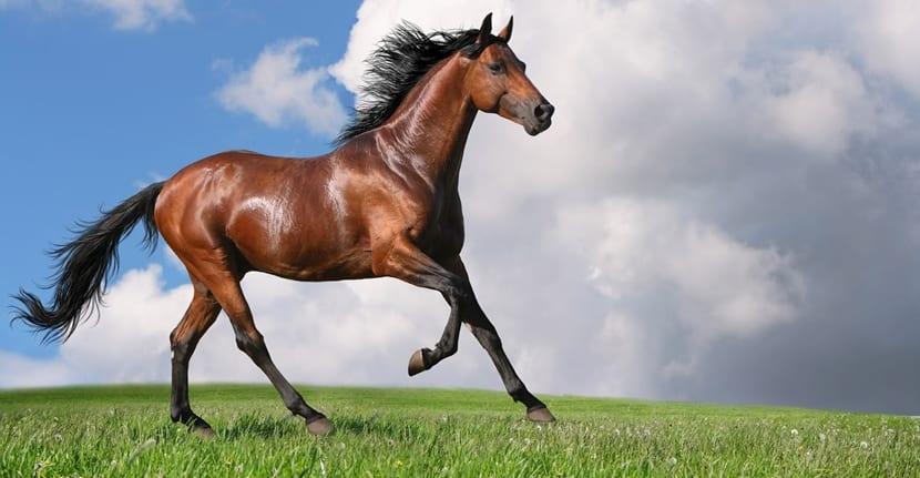 caballo evolucion