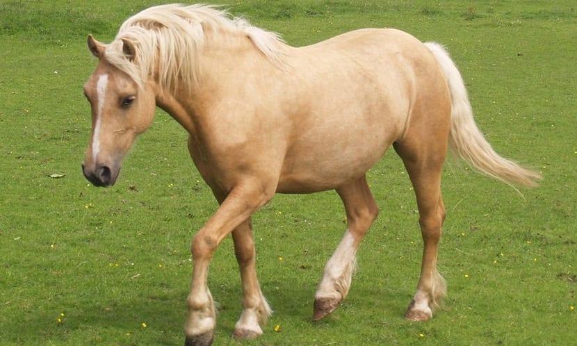 caballo-sonidos