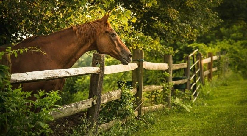 El caballo también coge resfriados