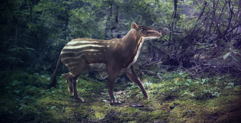 El primer caballo, Hyracotherium