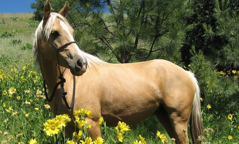 La inteligencia en los caballos