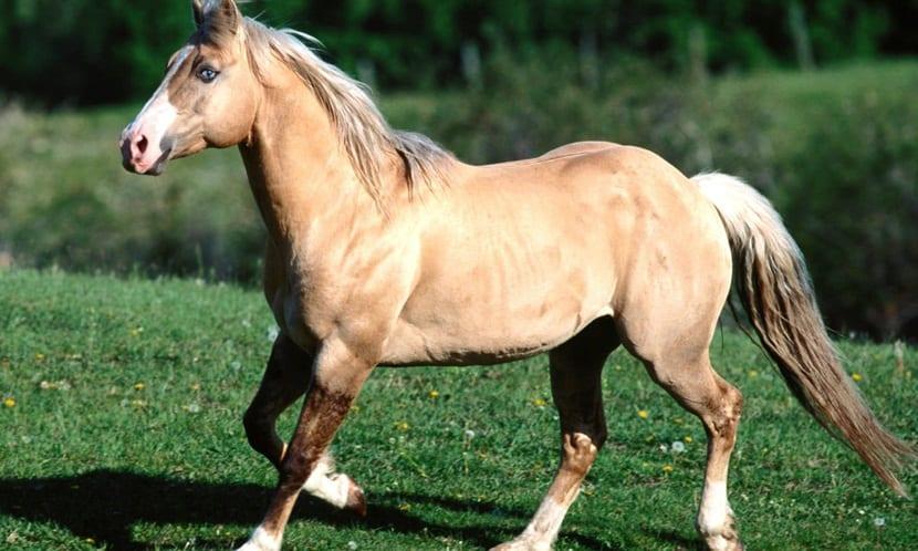 Prevenciones para un caballo viejo