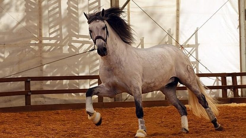 buenas practicas caballo