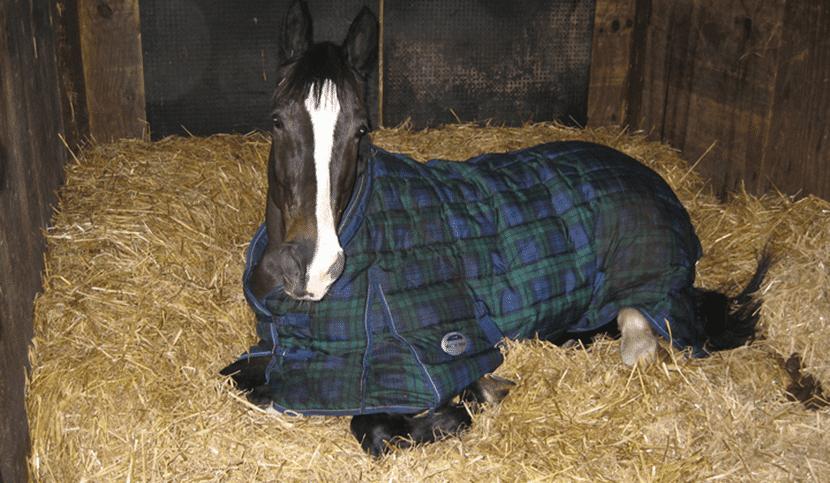 Qué hacer cuando el caballo se ha resfriado?