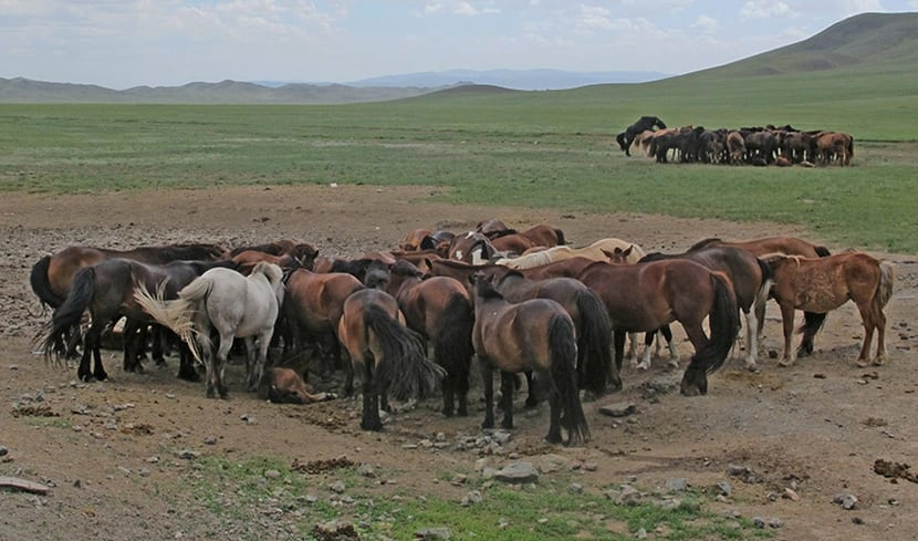 raza mongol