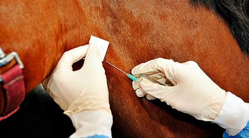 vacunar caballo
