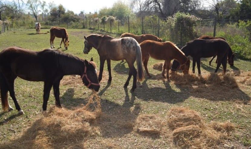 estres caballo