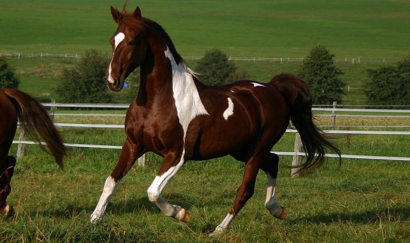 salud caballo