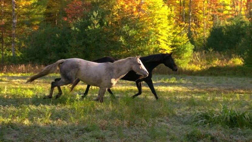 alimentación caballo oposición