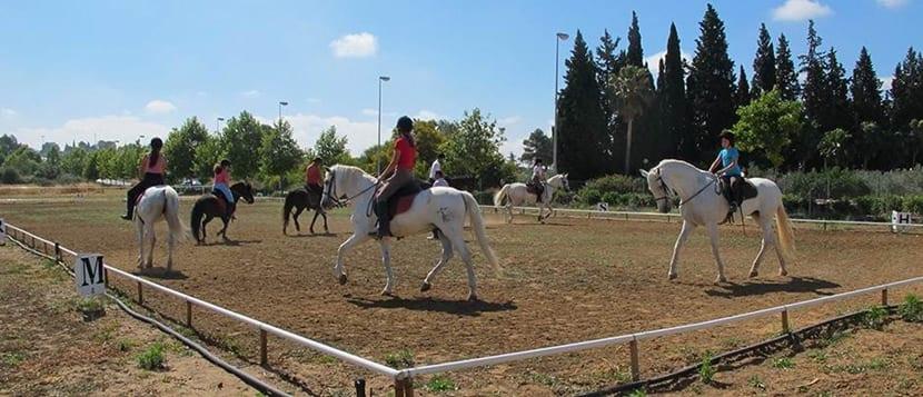 equitacion centrada basica