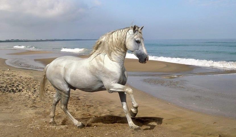 incomodidad del caballo que es el y