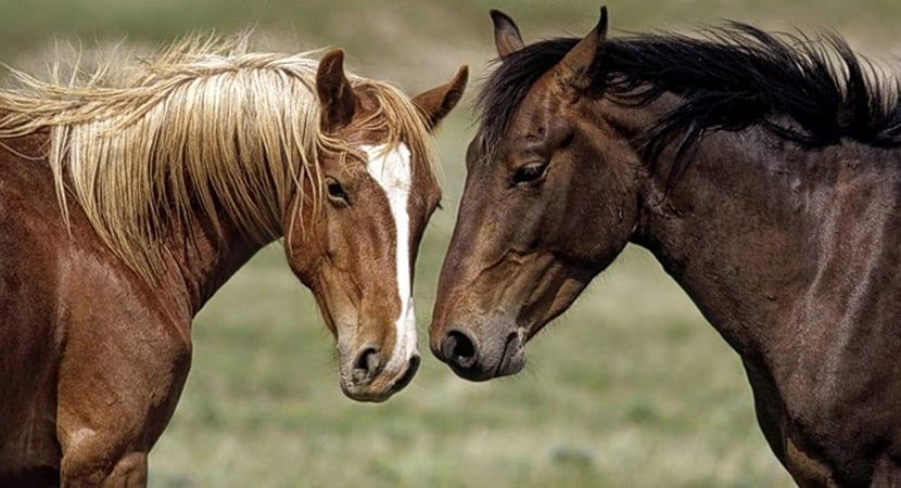 comunicacion caballos