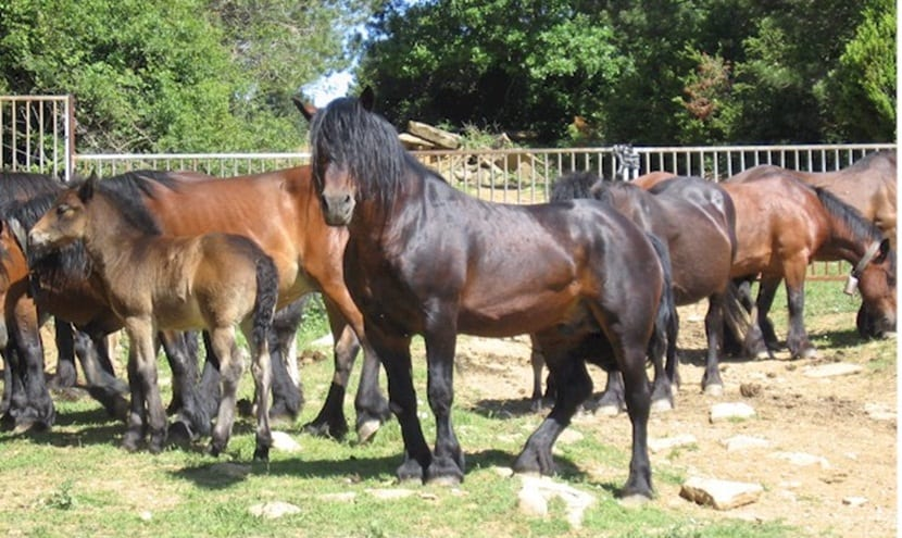 caballos-mayores
