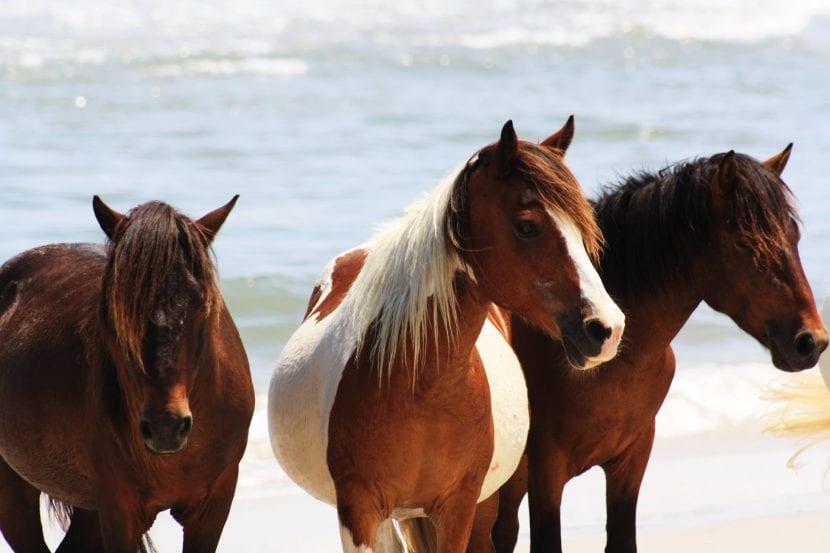 Conjunto de caballos