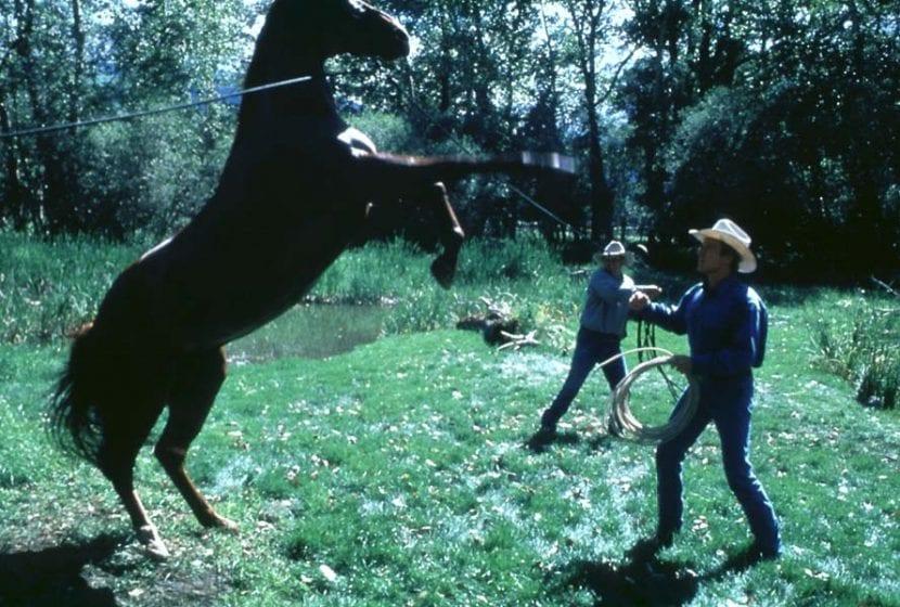 Fragmento película 'El hombre que susurraba a los caballos'