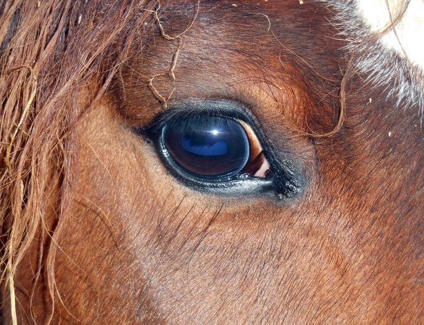 Estas son las partes de un caballo, ¿las conoces?