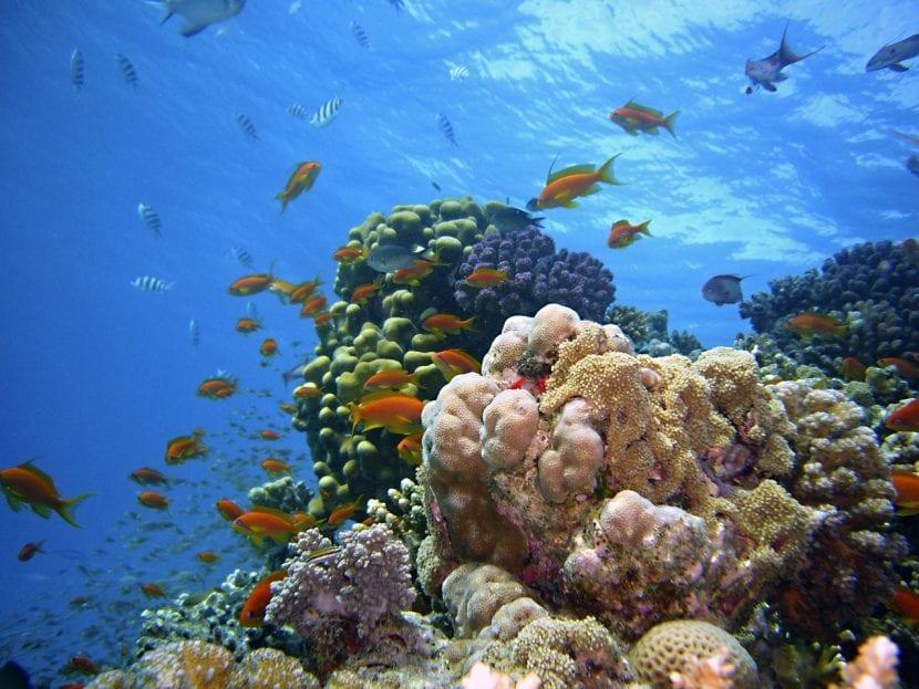 Arrecife de coral africano