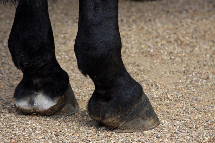 Cascos de un caballo negro