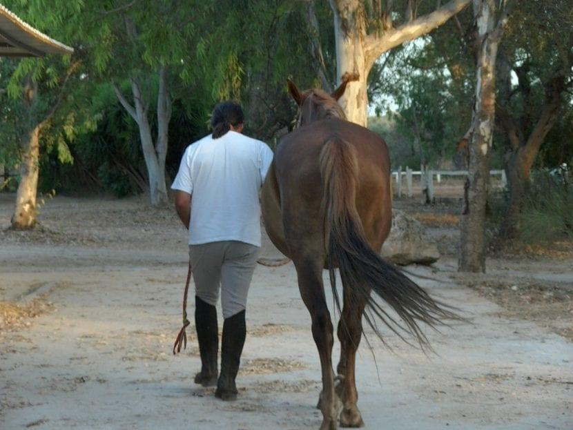 Hombre y caballo andando