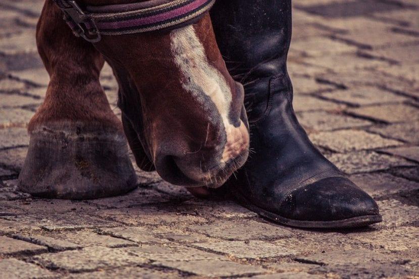 Pie de caballo y pie de hombre