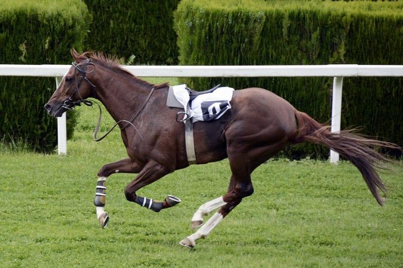 caballo más caro del mundo