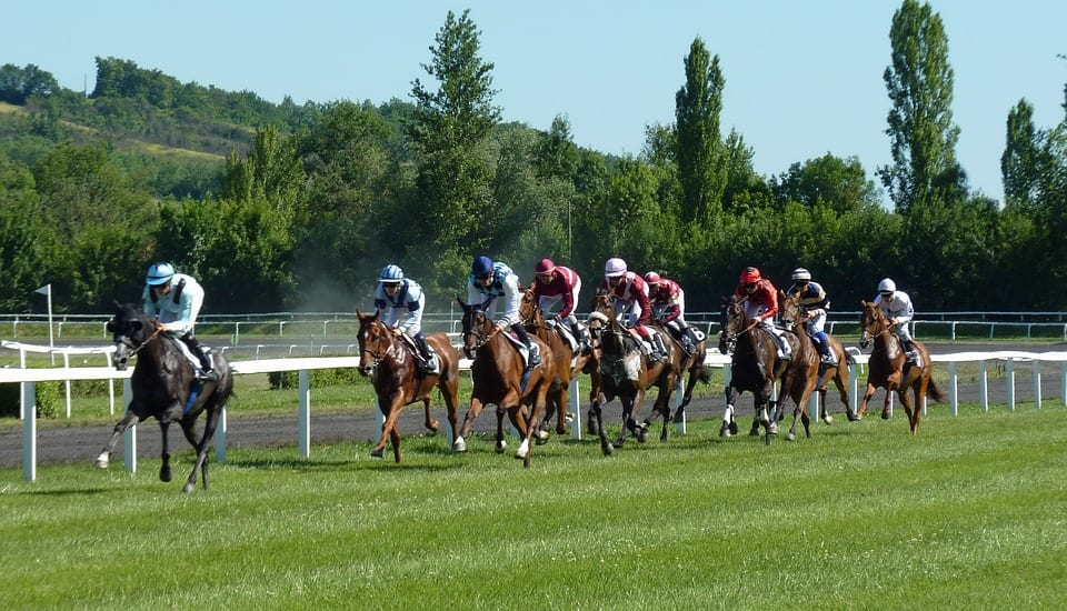 Grupo de caballos de carreras