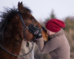 Con paciencia y respeto podrás domar a tu caballo