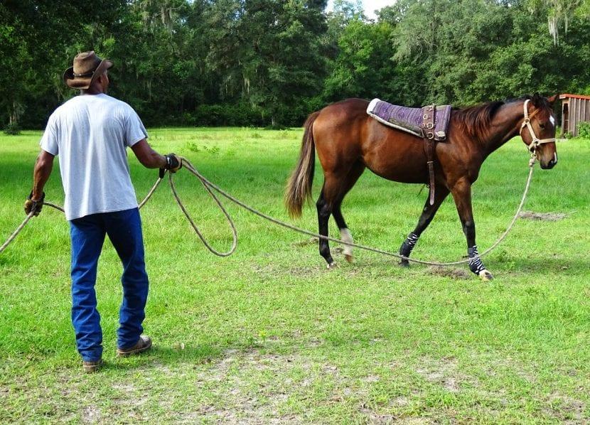 Utiliza el ramal para entrenar a tu caballo