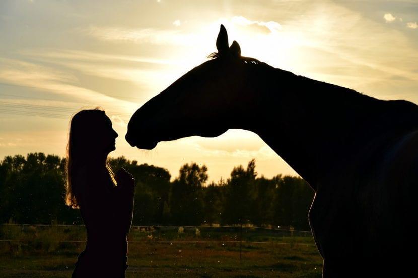 Puedes construir una amistad fuerte y duradera con tu caballo si lo tratas bien