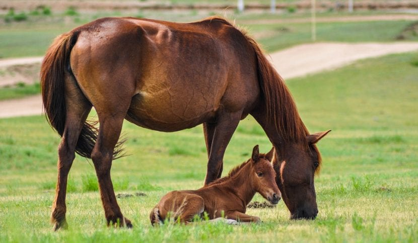 Es importante darle al caballo hierba para comer