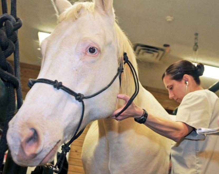 Cuida de tu caballo albino