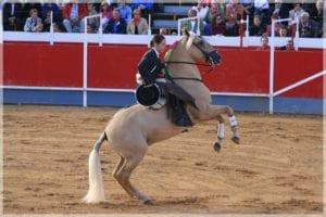 Vista de un caballo de rejoneo trabajando