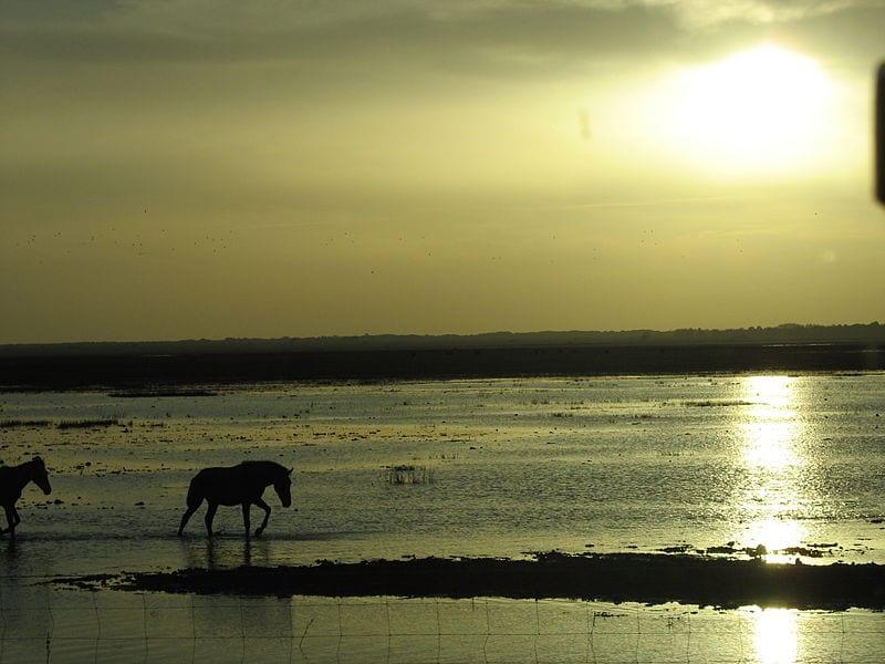 Vista de caballos en Doñana