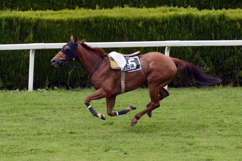 Vista de un caballo corriendo