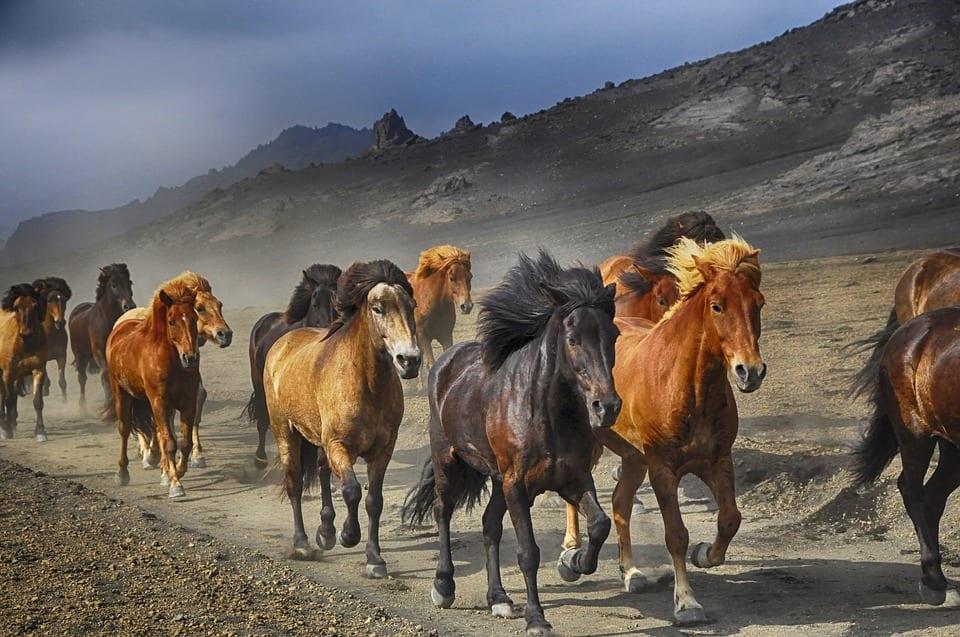 Libros sobre caballos