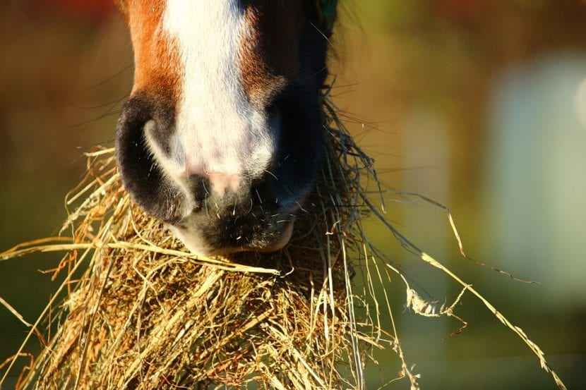 vitaminas y nutrientes para caballos
