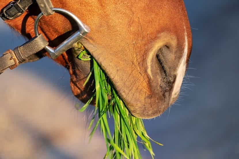 dieta caballo