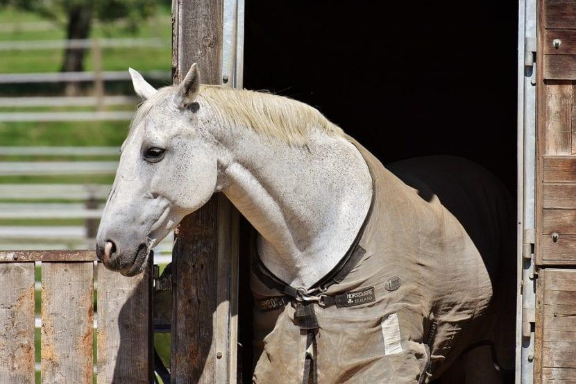 cuidados caballo