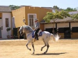 Caballo Cartujano