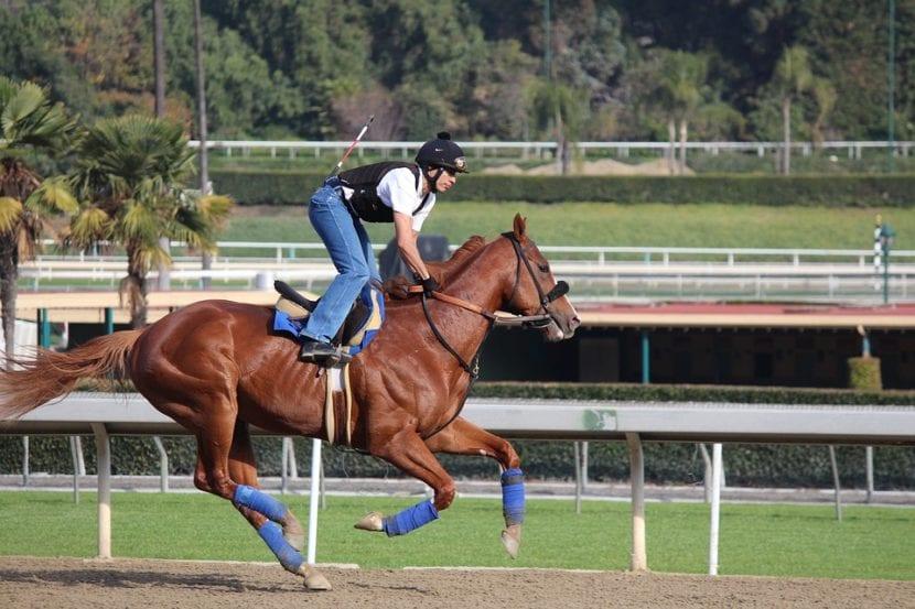 protector y vendas caballos