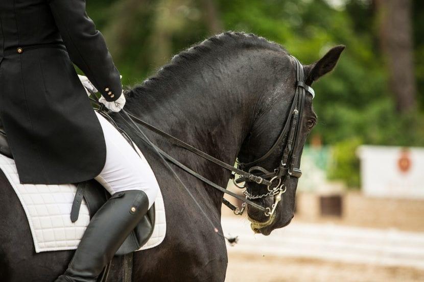 ropa equitación