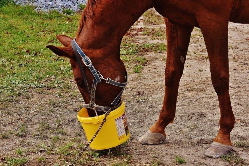 alimentación caballos